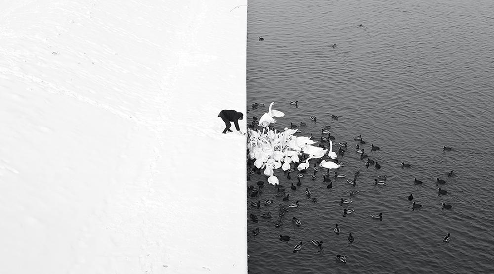 01 A_Man_Feeding_Swans_in_the_Snow.jpg