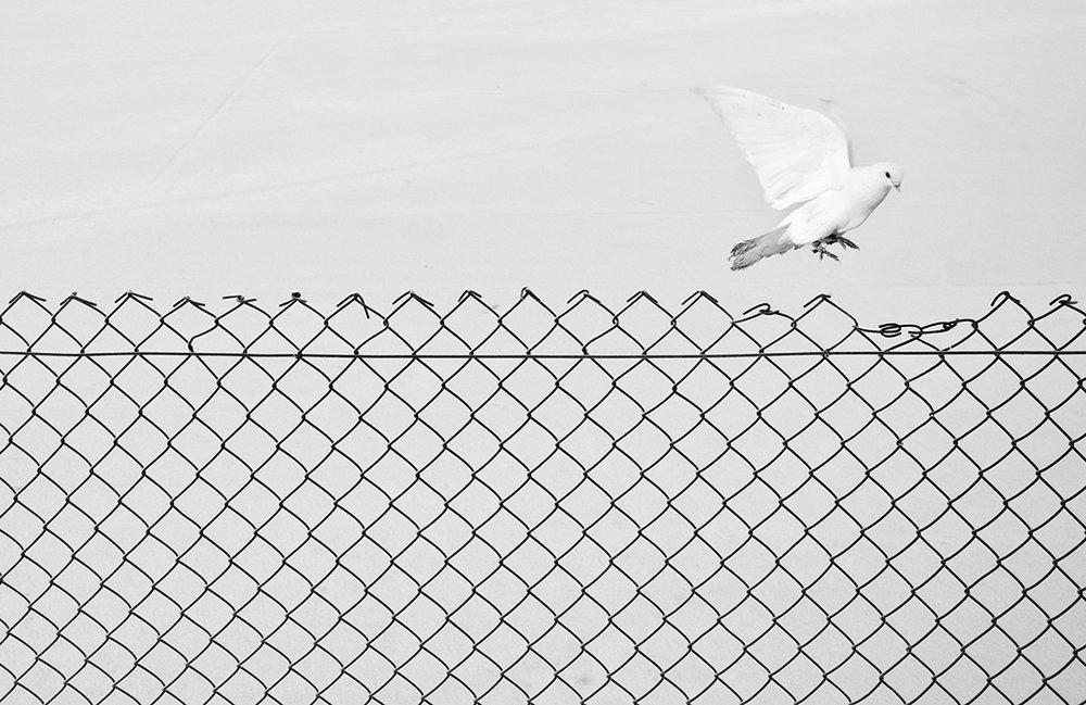 03 Liberation.jpg
