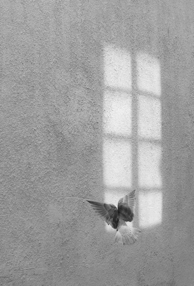 14 Secret window.jpg