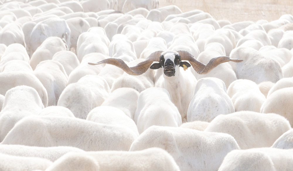 19 Out of the herd.jpg