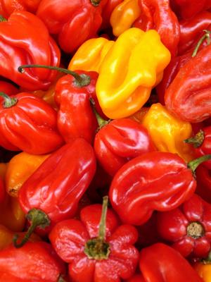 Pepper-recipes.png