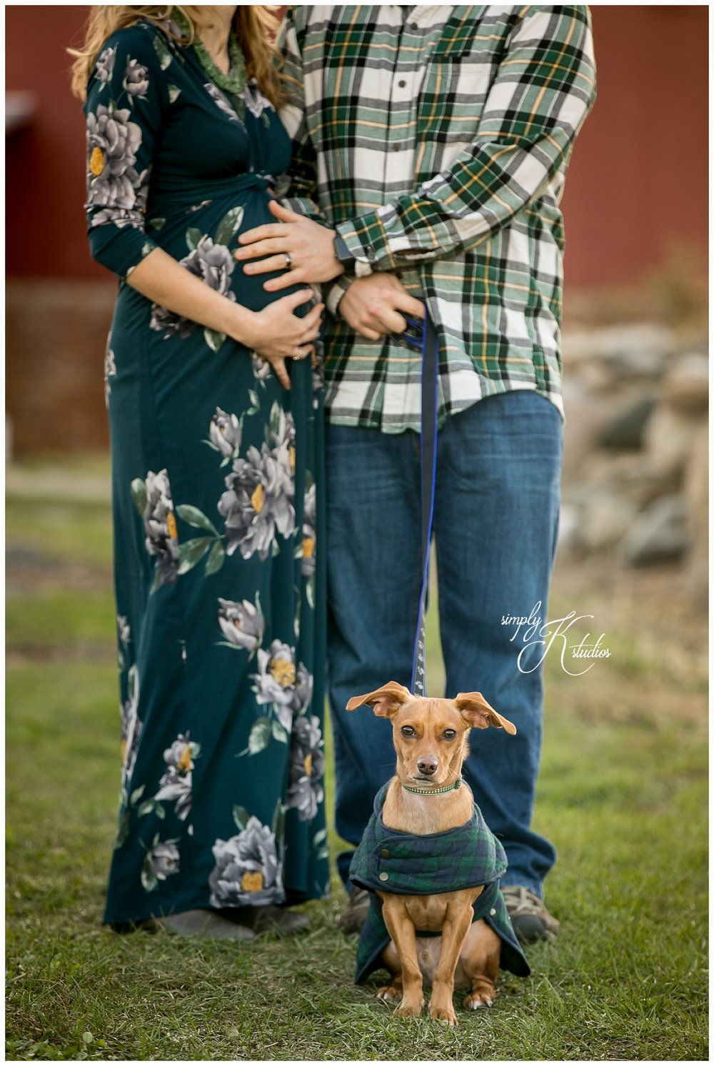 Dog-friendly maternity sessions.jpg