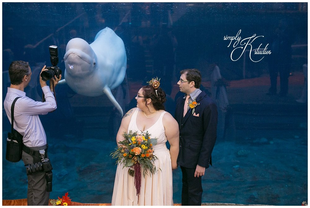 Wedding Photographers at Mystic Aquarium.jpg