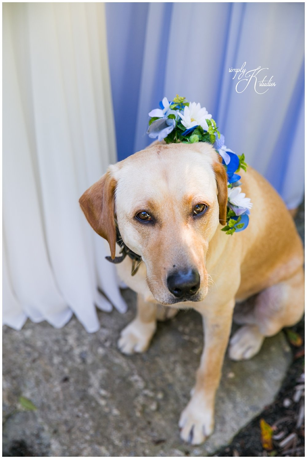Dogs in Weddings.jpg