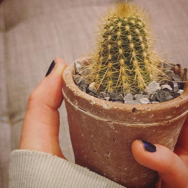 ✨Life's tough but so are you!✨ Some inspiration from a little cactus - so tiny but able to protect itself, stay resilient, and thrive in a harsh desert climate (though this one lives in nyc with its own set of challenges) 🌵