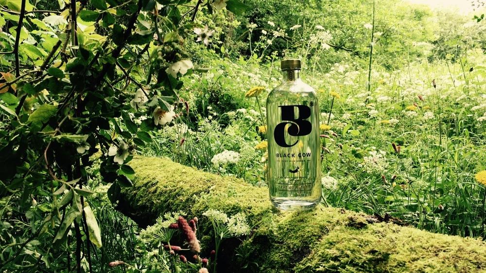 Pack Shot Woods.jpg