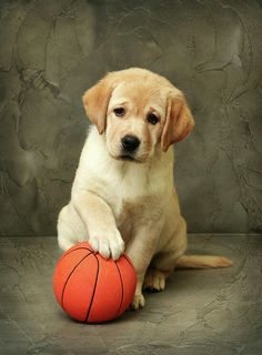 puppy and basketball