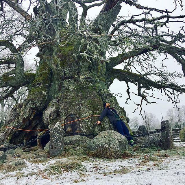 Tid för reflektion o lugn 😌 Tack Alla för 2018 års roliga o utmanande trädjobb 🙏🏻 Gott Nytt År 🎊 från Kvilleken 🌳