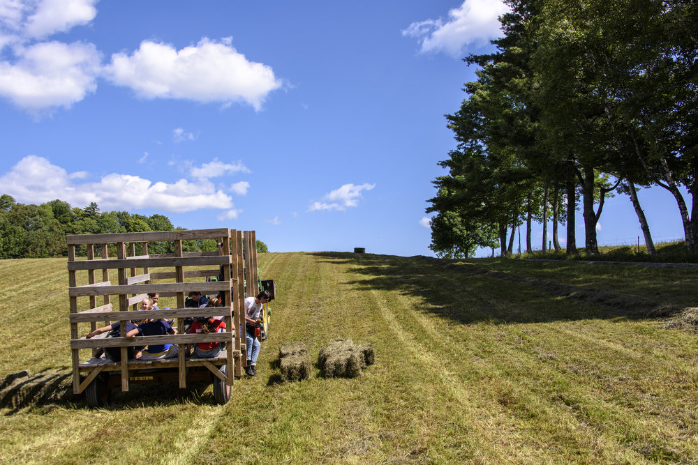 second cut of hay0221-Edit.jpg