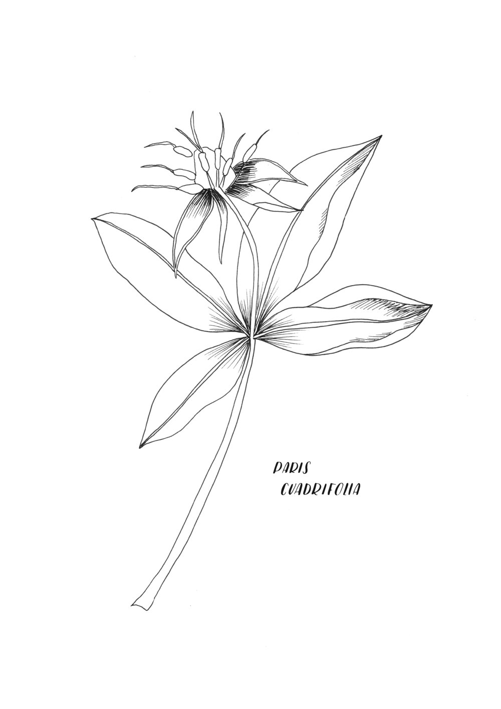A4 ORIGINAL Paris Quadrifolia.jpg