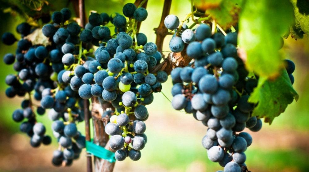 winery6.jpg