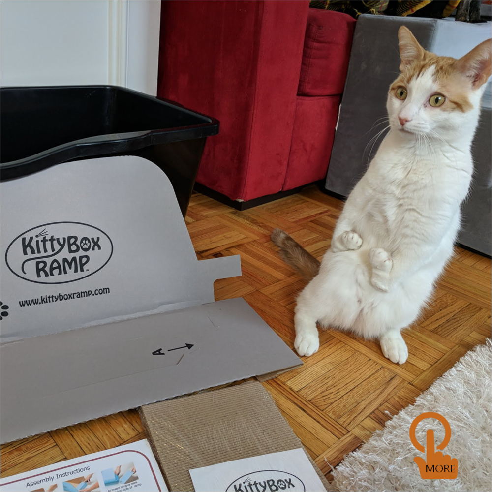 Making Watson's Life Easier - Read about Watson's Kitty Box Ramp experience, told by his best friend, Melanie Lusnak.