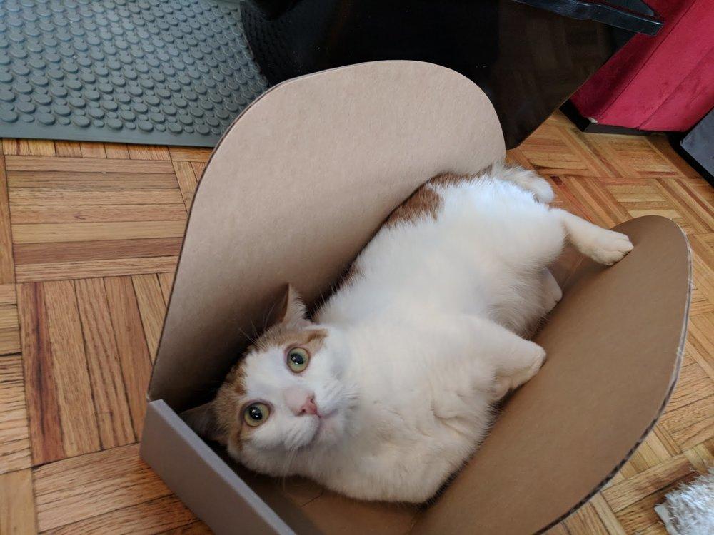 Handi-Cat Watson 2.jpg