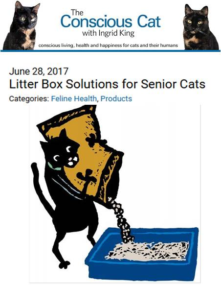 LITTER BOX  SOLUTIONS FOR SENIOR CATS   The Kitty Box Ramp offers another alternative to getting a litter box with a lower entry.