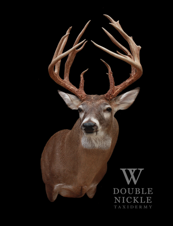 Whitetail7.png