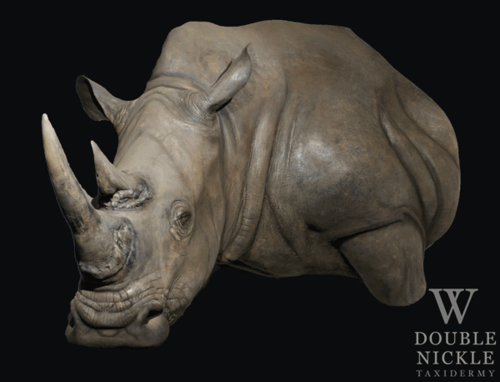 rhinoredo1.png