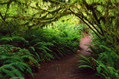 path-in-the-jungle-forest-green-jungle-nature-path-400x267.jpg