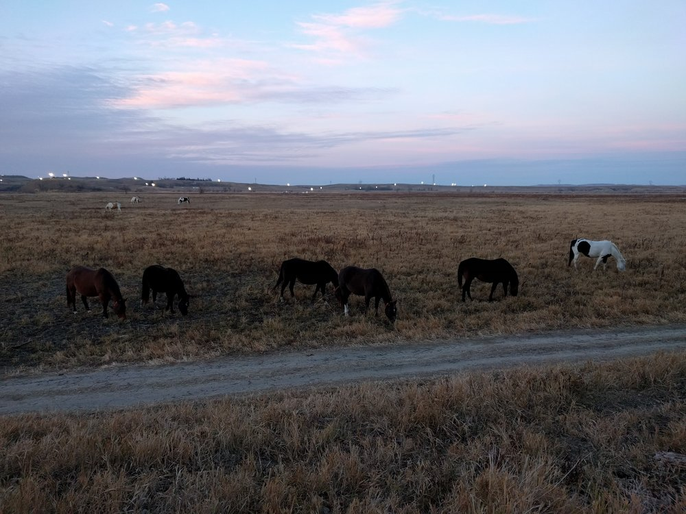 Horses grazing at camp