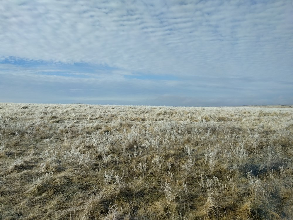 North Dakota frost at Standing Rock