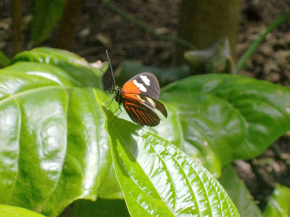 niki photography butterfly