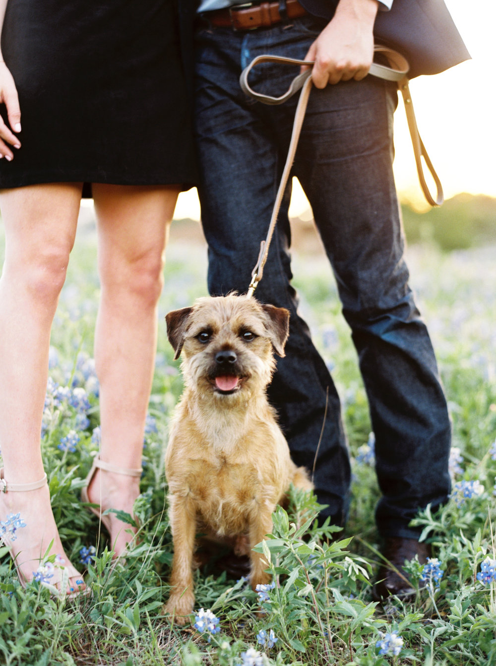 puppy at engagement pictures