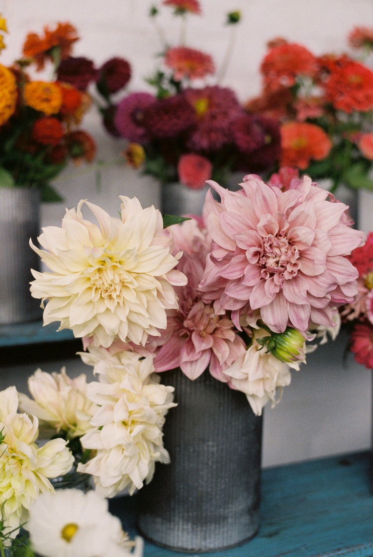 2019 Fall Dahlia Madness Floral Workshop Saturday September 7
