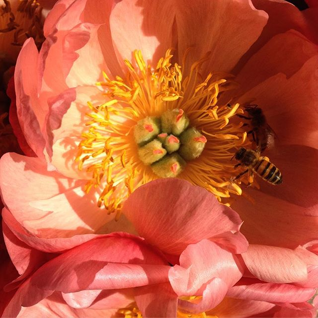 Imagine how happy you would be if you were a bee and you had been flying through London all day and then you came across this big old juicy flower