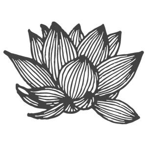 class6_lotus.jpg