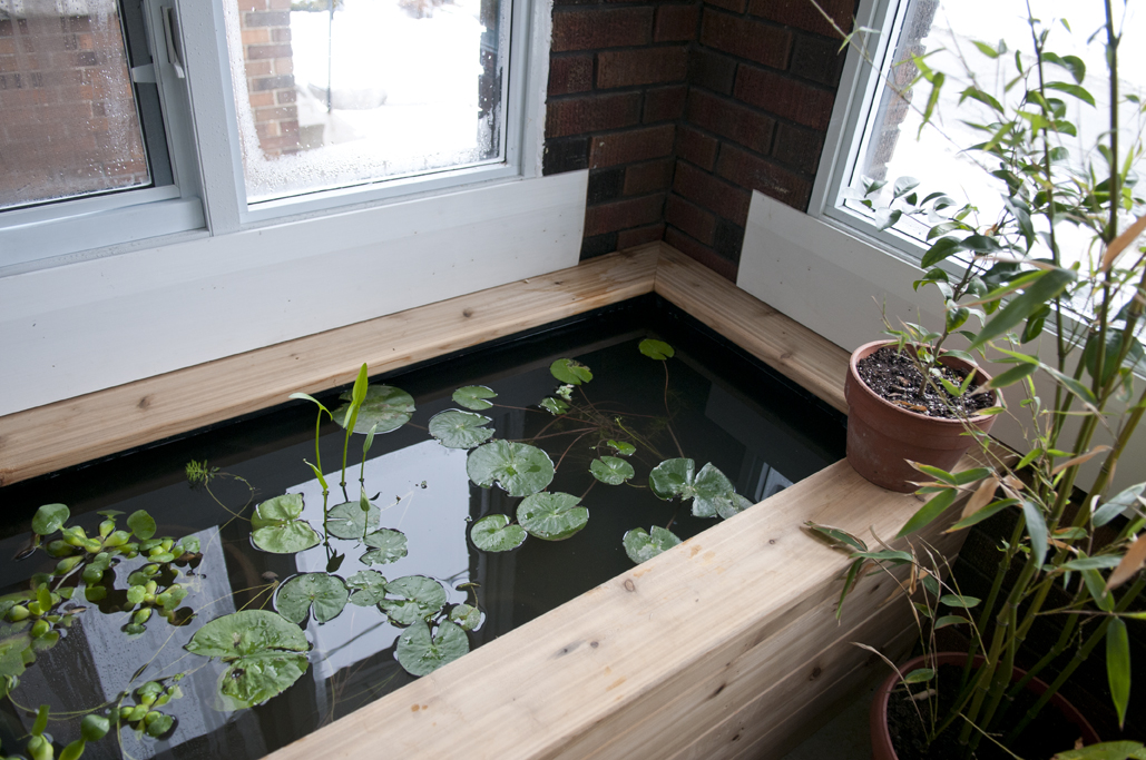 indoor_pond_3_Feb2013
