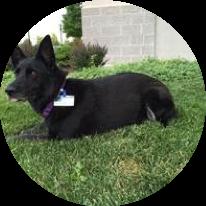 Asha-Service-dog-Sage-Health-Care