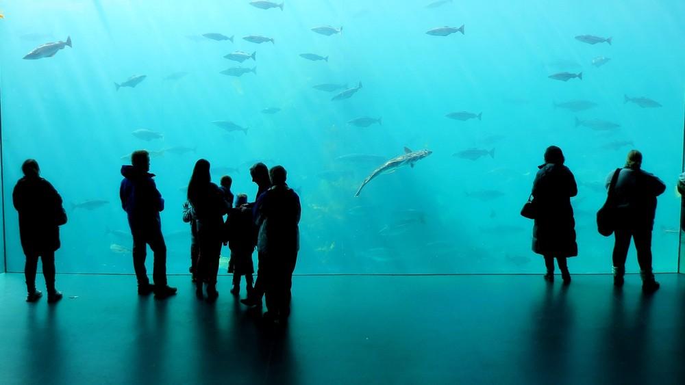 Aquarium (alesund).JPG