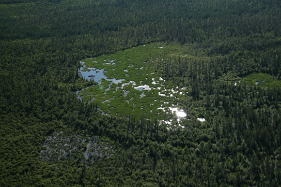 At 850 m long, the world's largest documented beaver dam can be found in Canada's Wood Buffalo National Park. In this picture, the dam can be seen along the entire left, crescent-shaped edge.