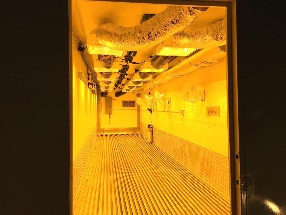 plantless doorway.jpg