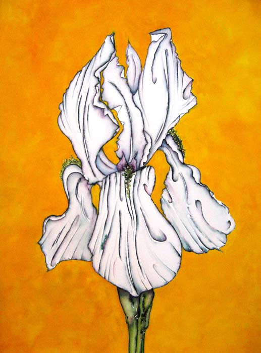 Argy-Burgess_Iris_on_Gold_WC_18X24-sml.jpg