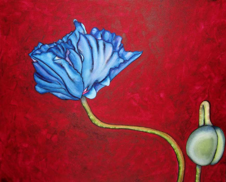 Argy-Burgess,Blue-Poppy,16-X-20',-WC-sml.jpg