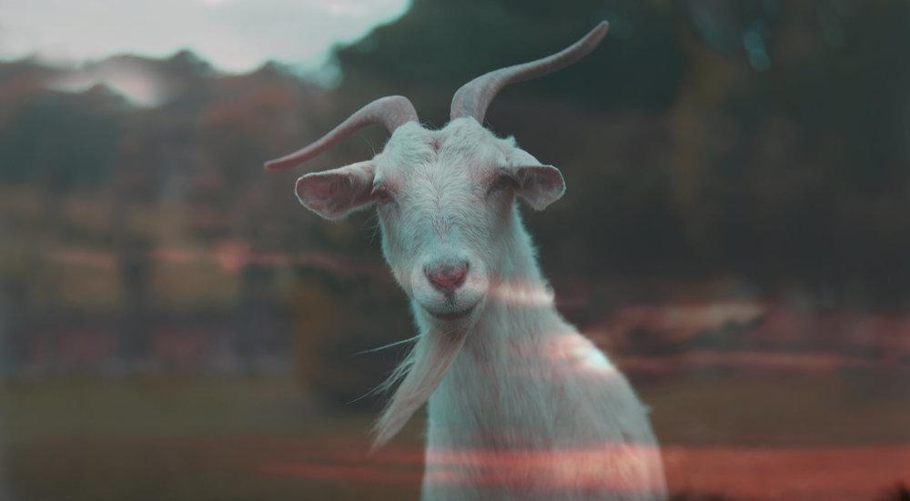 CW_Goat 2_LFB_FFB_FFD.jpg