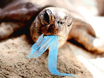http://www.greenhome.com/blog/the-impact-of-plastic-bags-on-the-environment