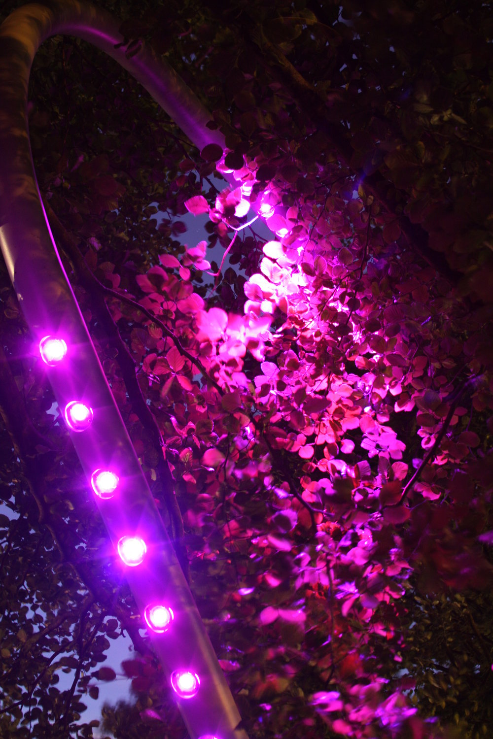 JBS_NormandPark_bright-pink-light.jpg