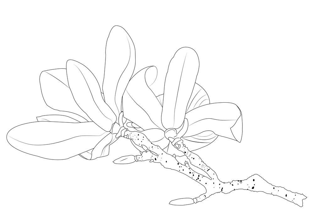 magnolia-01 copy.jpg