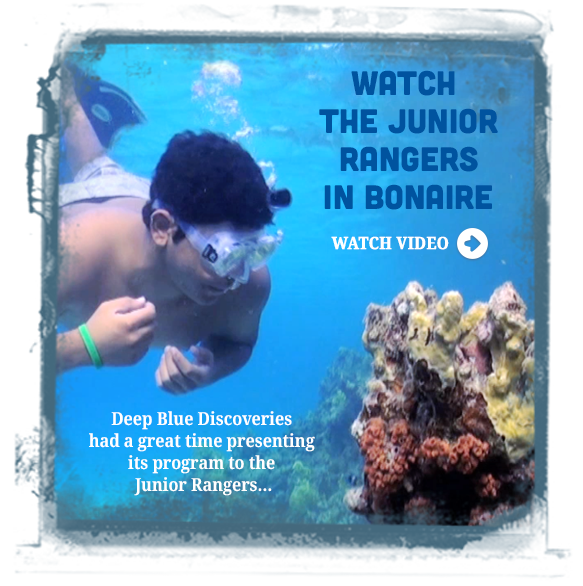 junior-rangers-in-bonaire.png