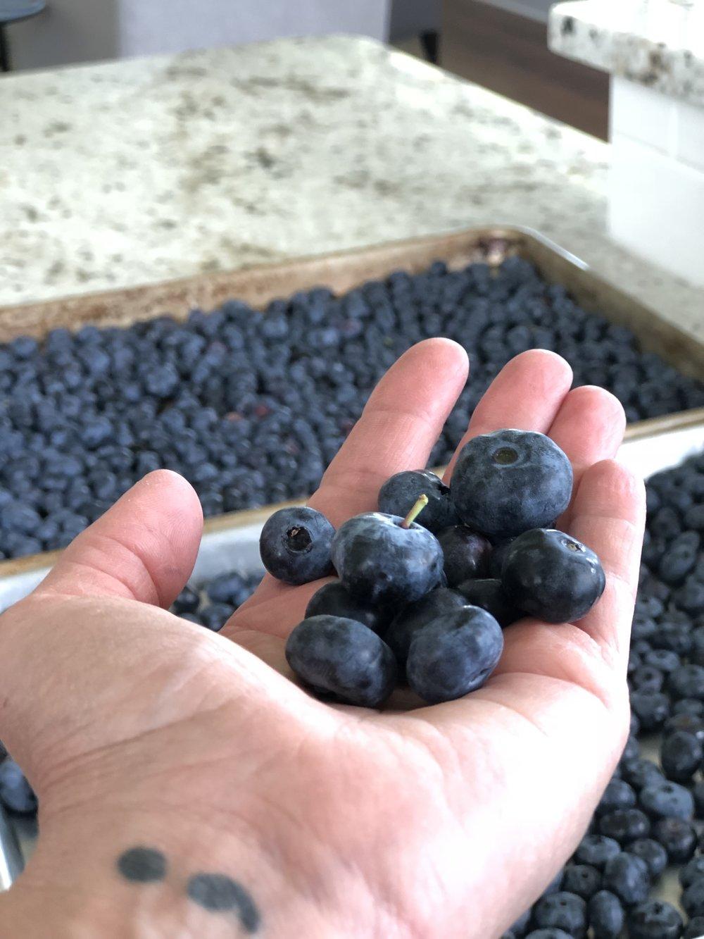 Rush River Blueberries