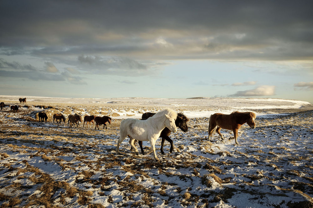Iceland_Horses_04.jpg