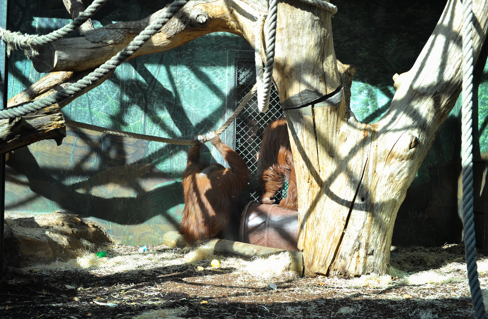man and monkey in cage 2.jpg