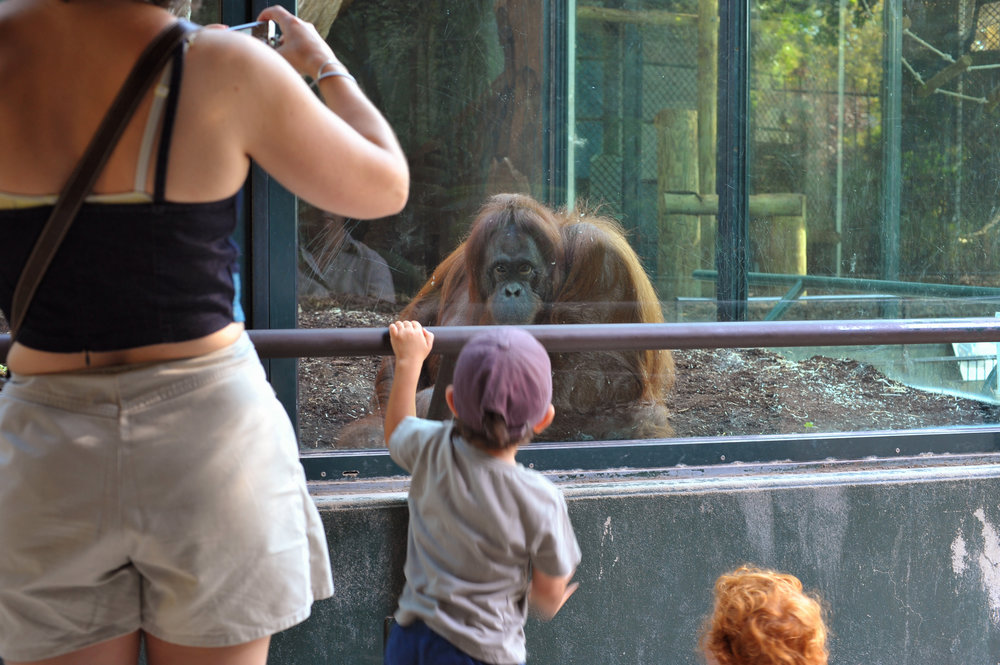 orangatange being photographed.jpg