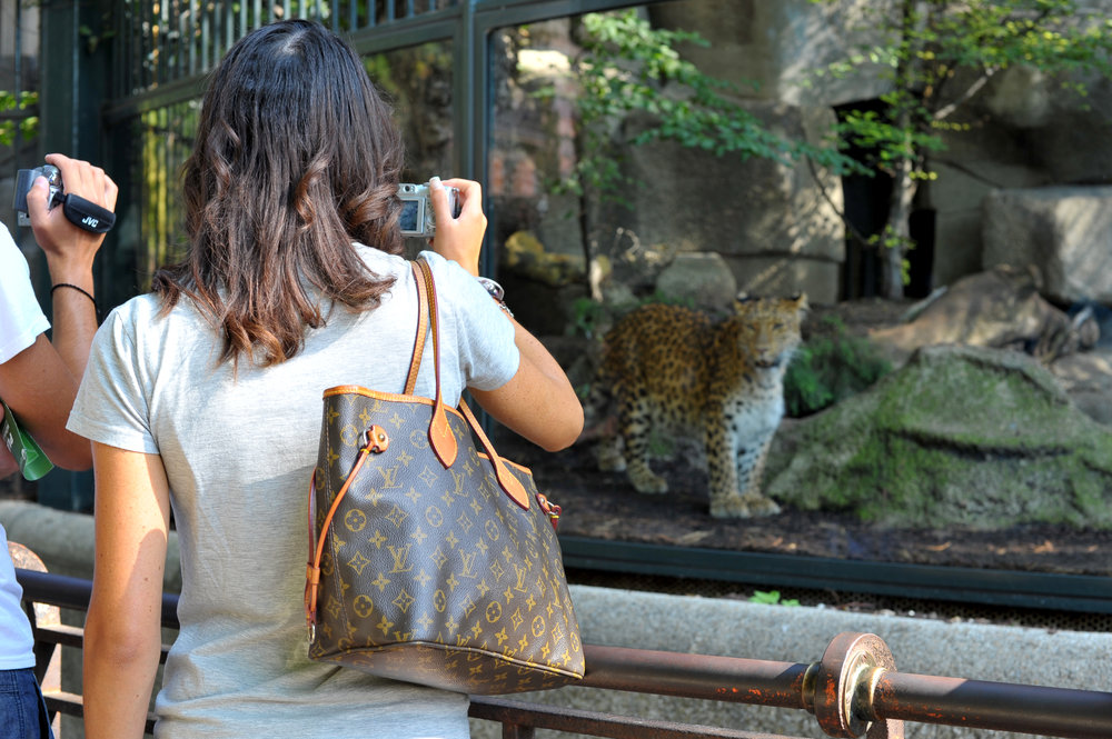 woman photographing leopard.jpg