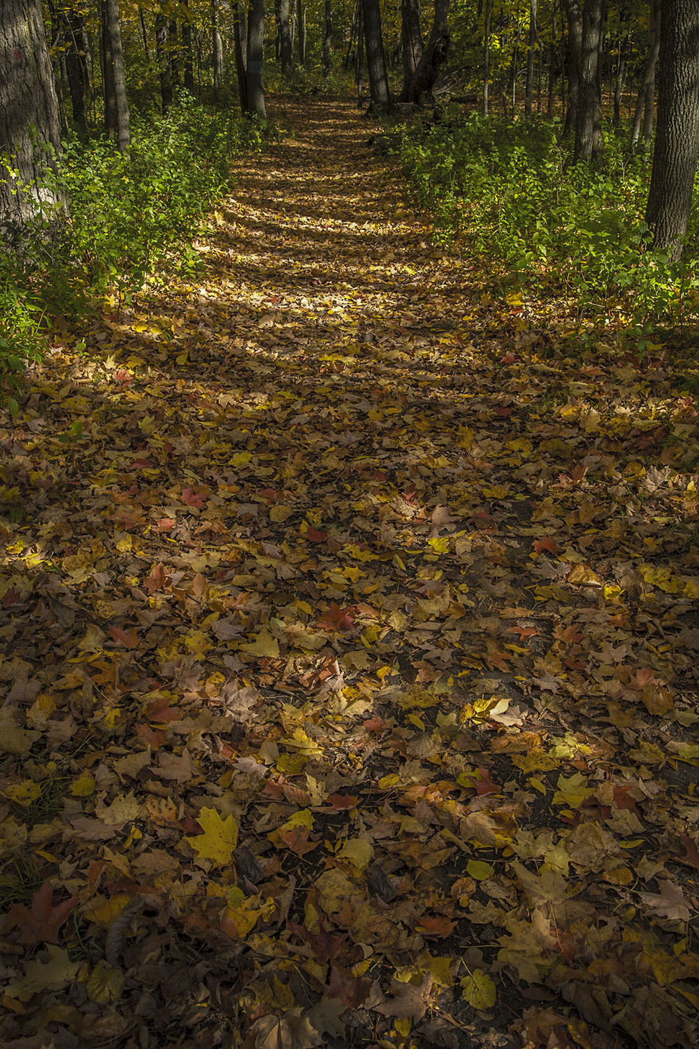 Trail of Fallen Leaves
