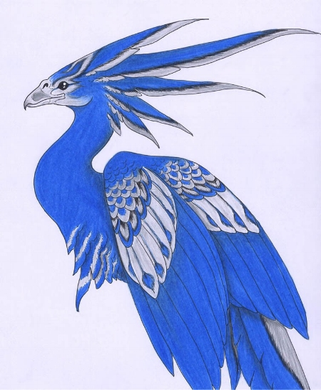 Beautiful Phoenix drawing by Verreaux.