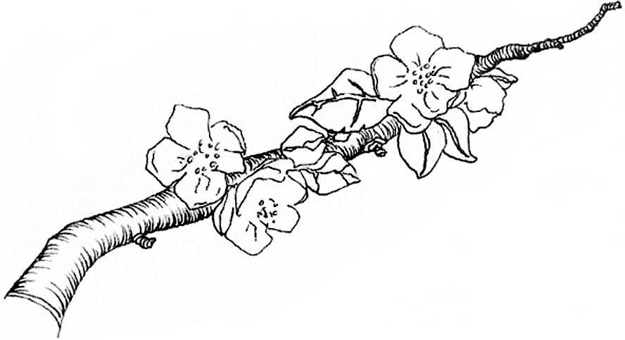 Apple blossoms final.jpg