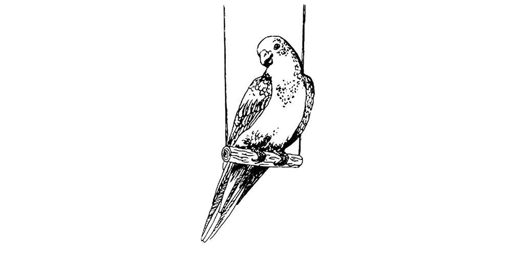Parrot final.jpg