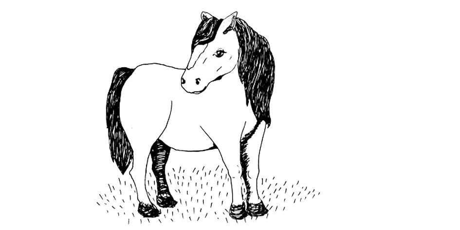 pony final.jpg